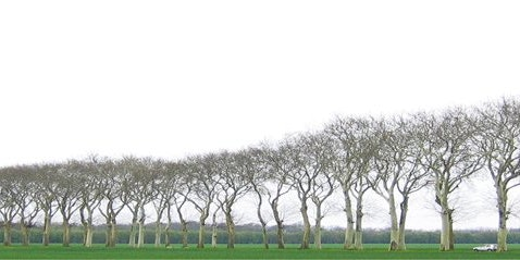 Renaissance Tree Care