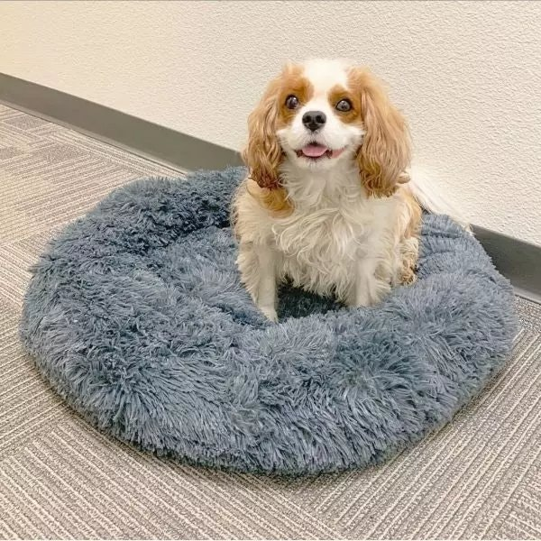 Alpha Paw Cozy Calming Bed