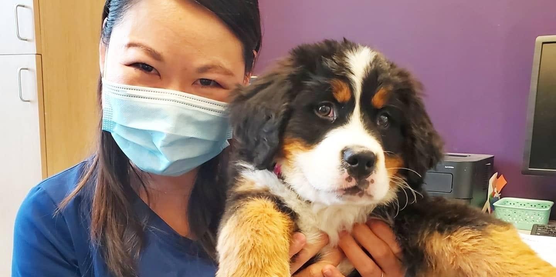Northfield Veterinary Hospital