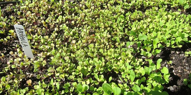 Gogo Green Garden