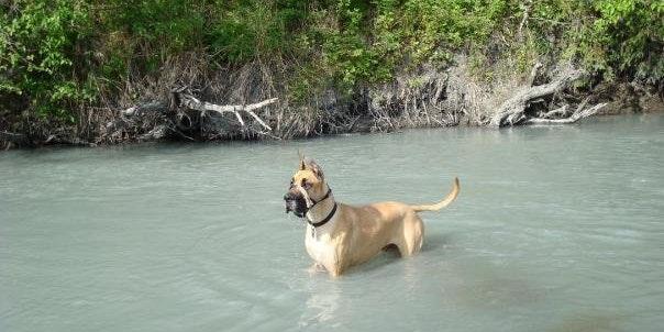 Cherry Creek State Park- Off Leash Dog Area
