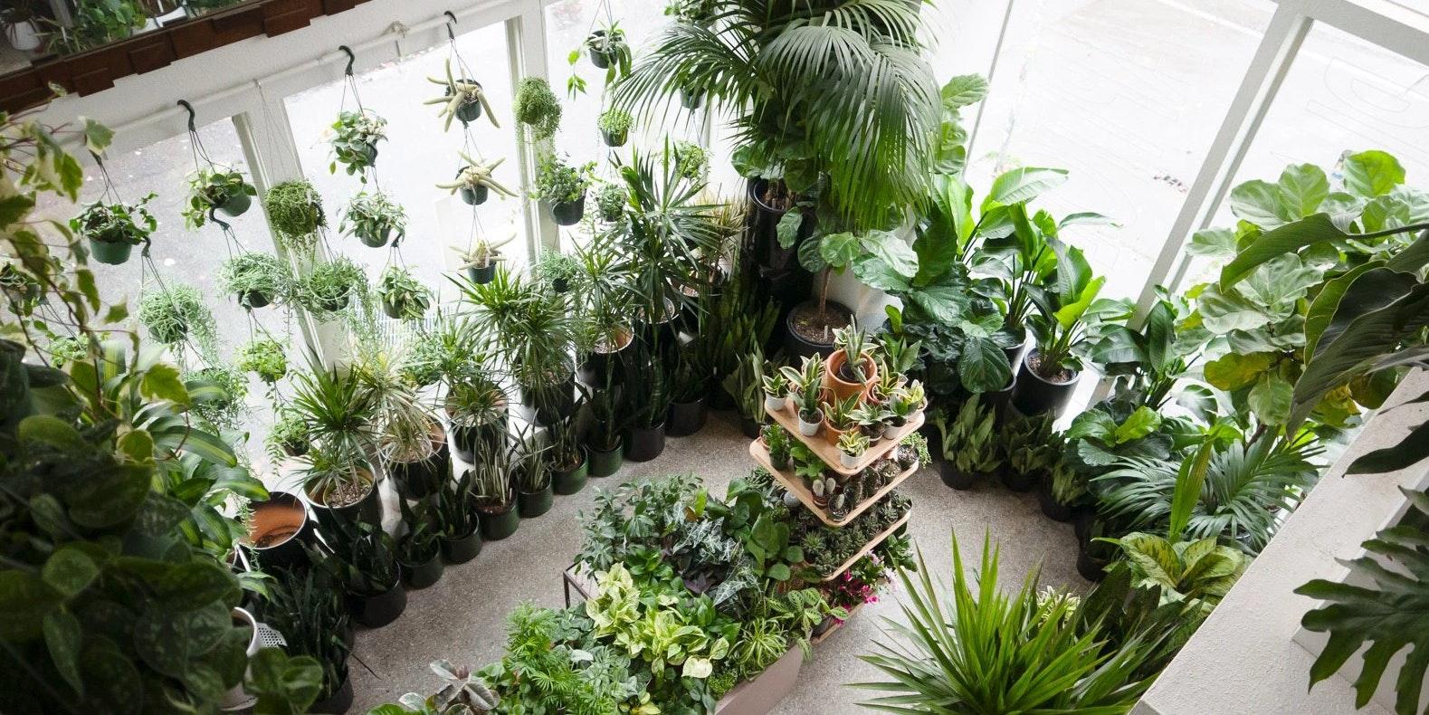 Plant Shop Seattle
