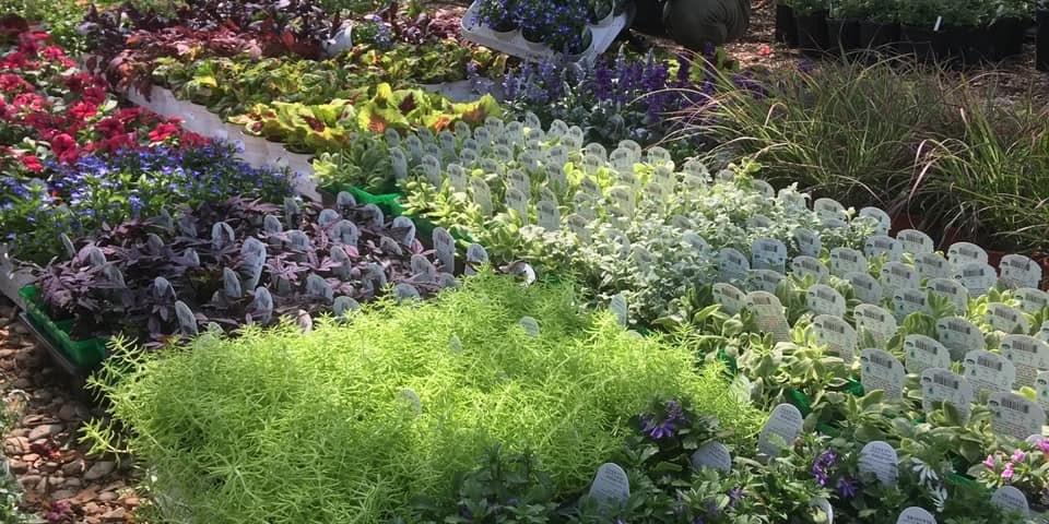 Green 'N Growing Nursery