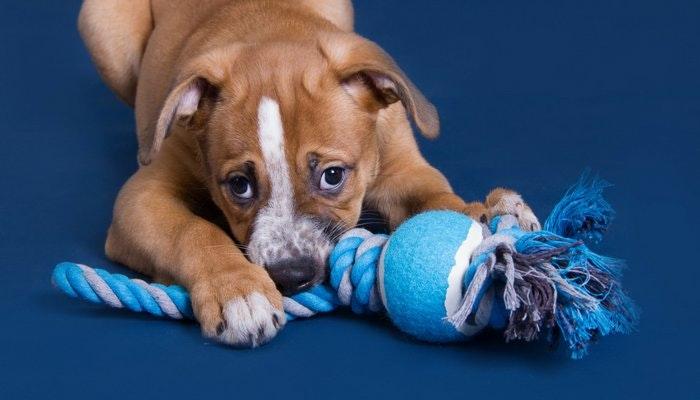 Dog Tug Rope Toy