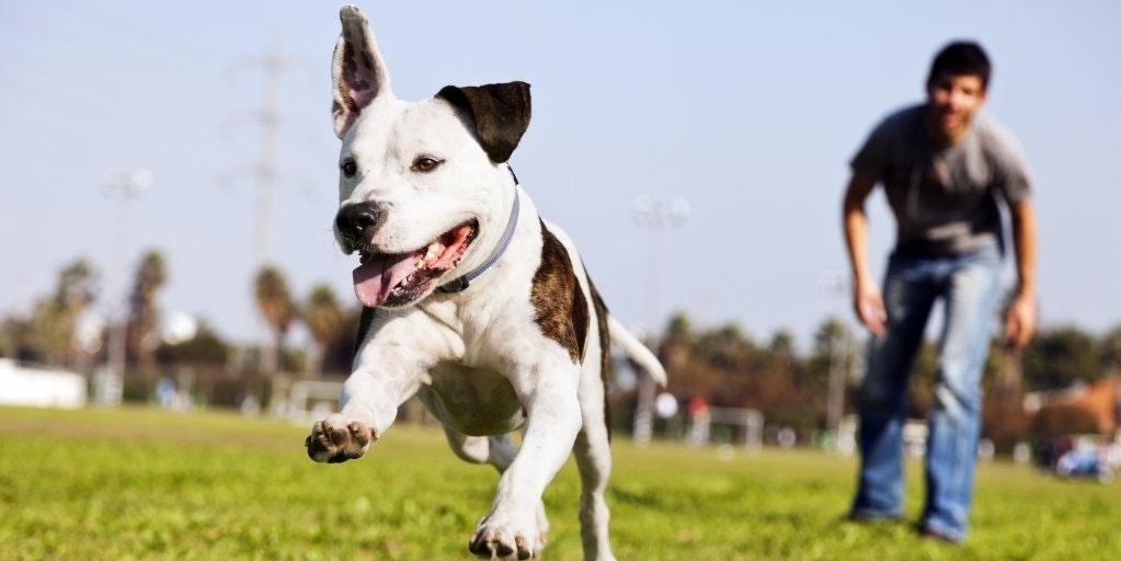 Strut the Pup
