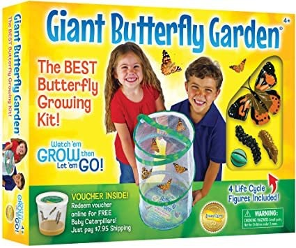 Insect Lore - Bh Butterfly Growing Kit