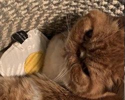 Catnip Fried Egg