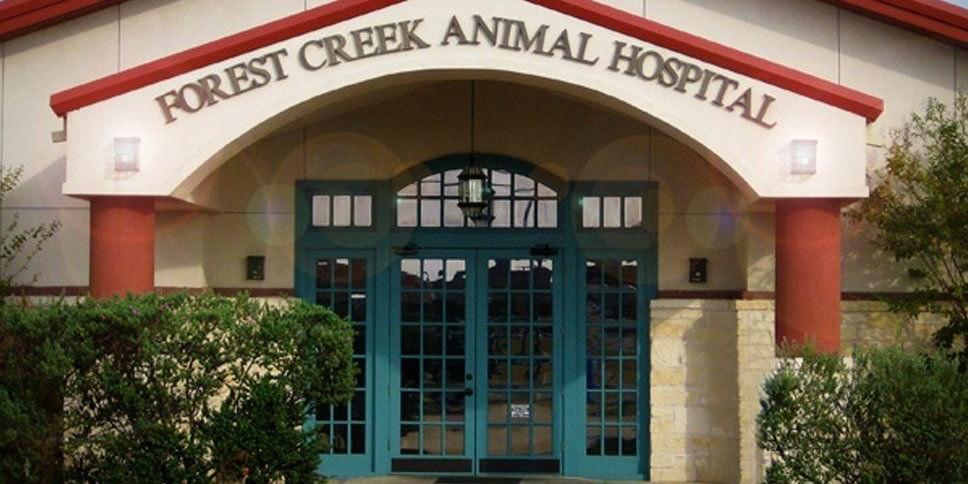Forest Creek Animal Hospital