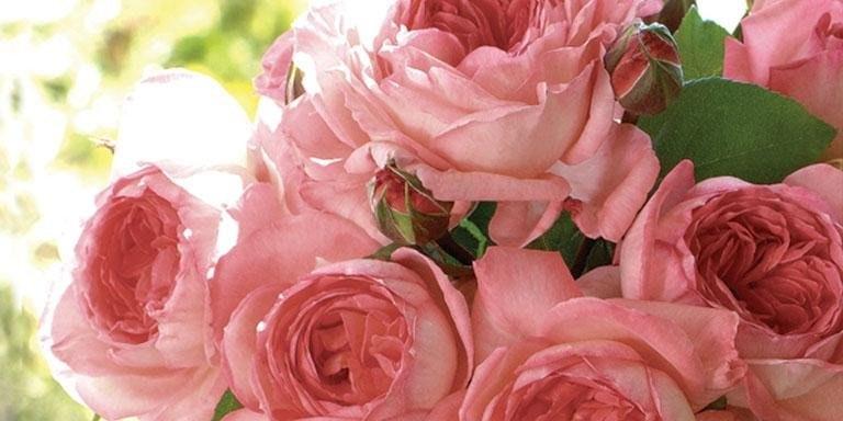 Ali Bleu Flowers & Gifts