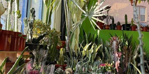 The Plant Room Denver