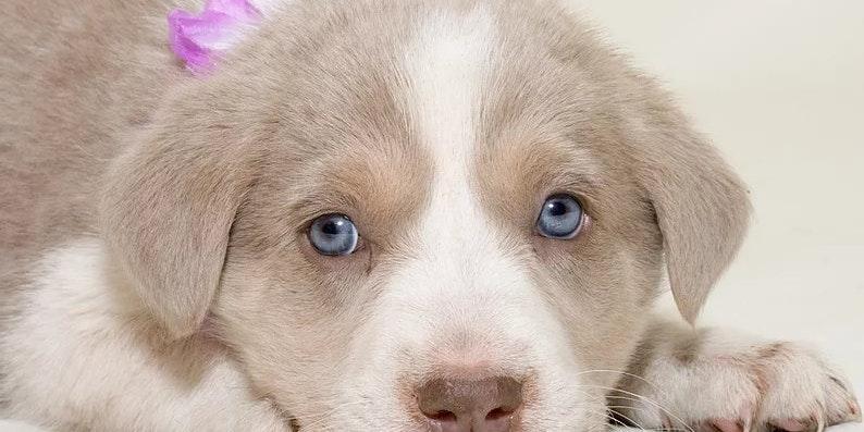 Colorado Puppy Rescue