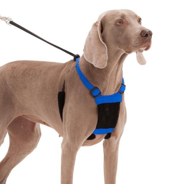 Sporn No Pull Dog Harness