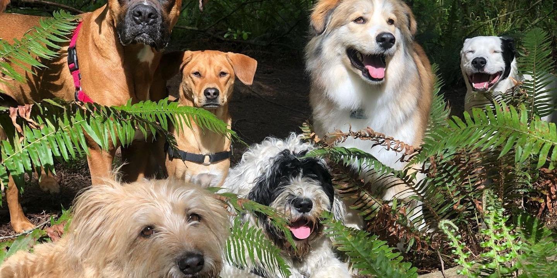 Dog Trots