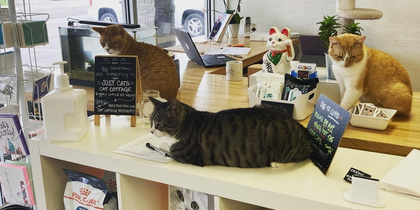 Just Cats Store