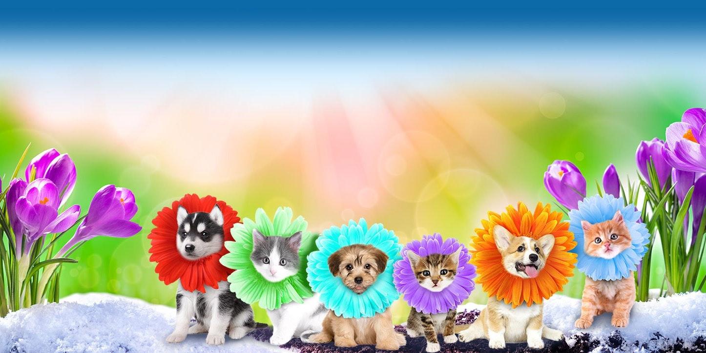 Binford Pet Wellness Clinic