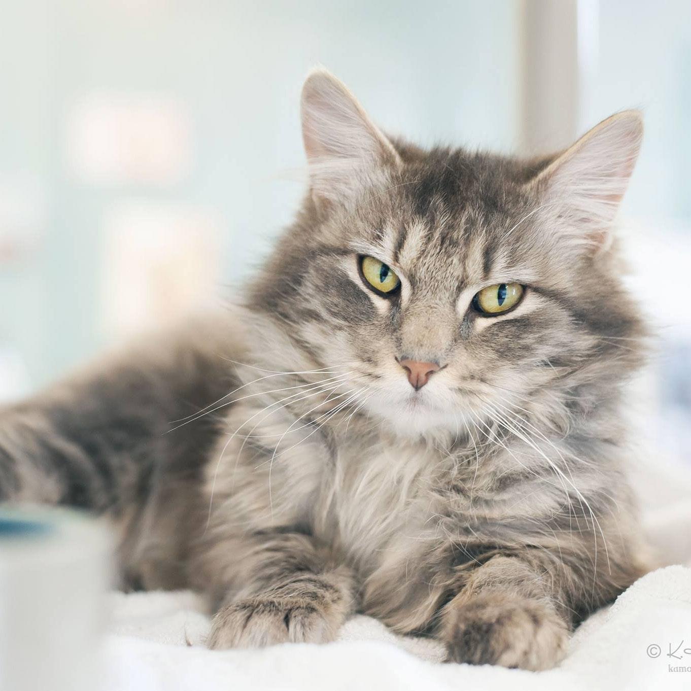 Seattle Area Feline Rescue