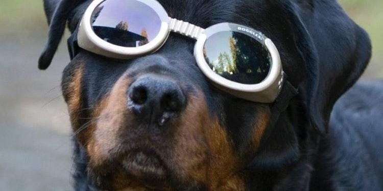 Seattle Purebred Dog Rescue